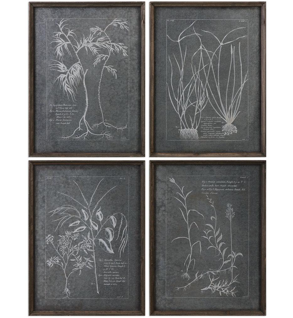 Root Study Print Art (Set of 4)