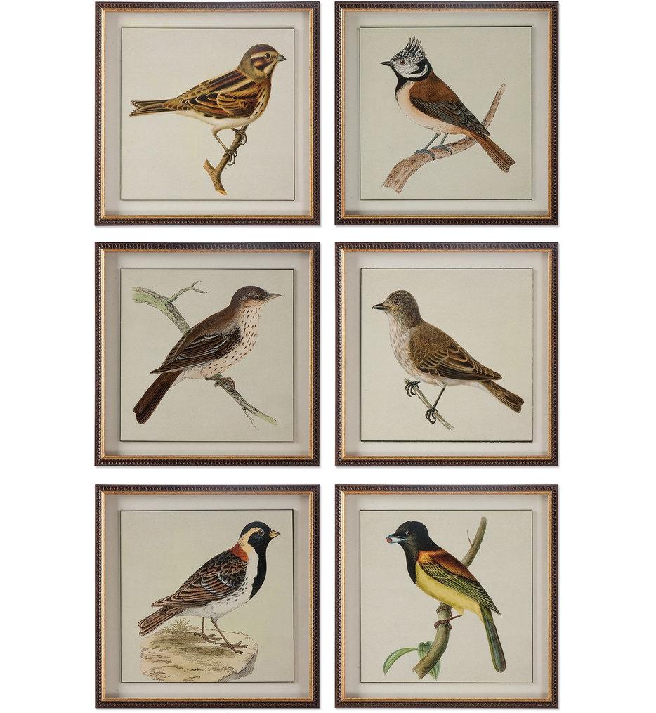 Spring Soldiers Bird Prints, (Set of 6)