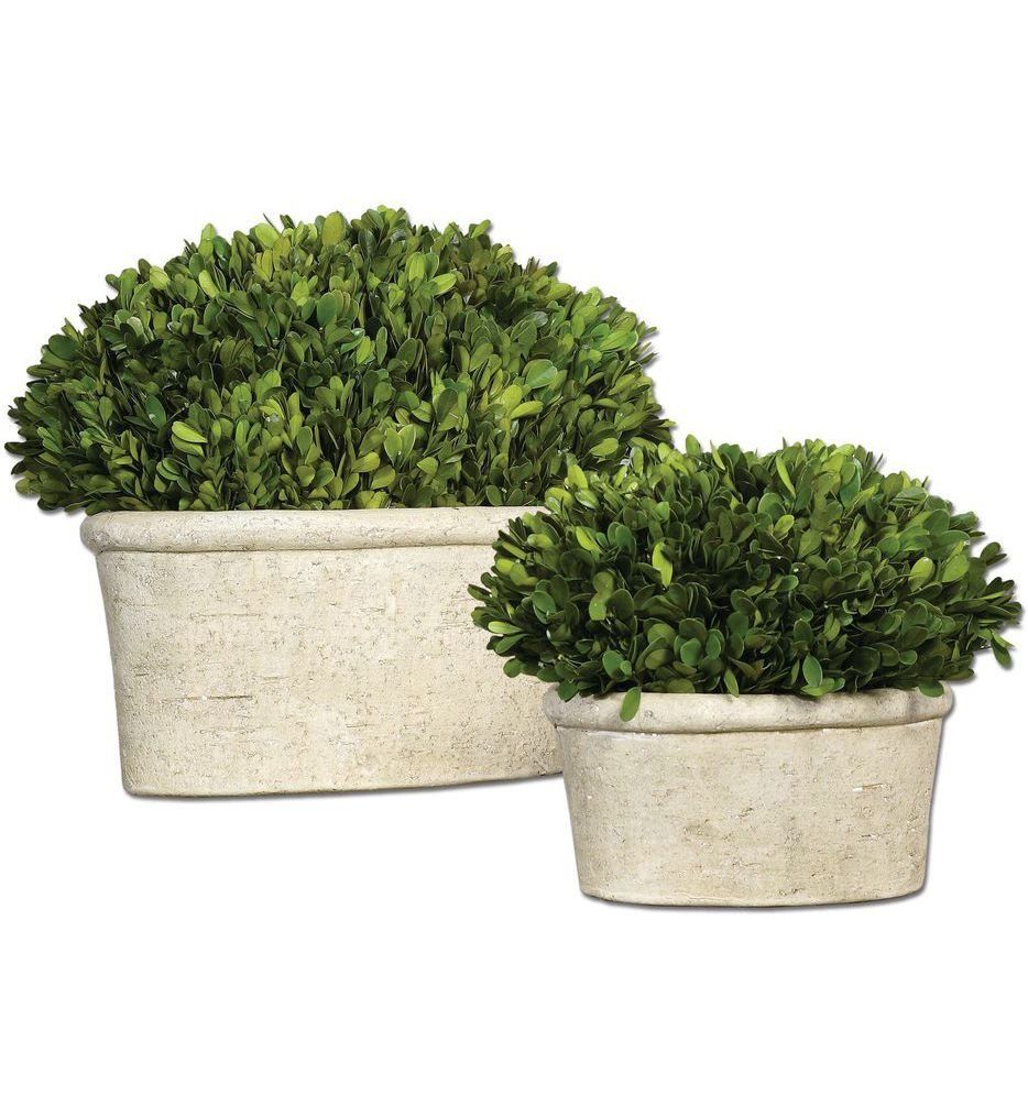 Oval Domes Preserved Boxwoods (Set of 2)