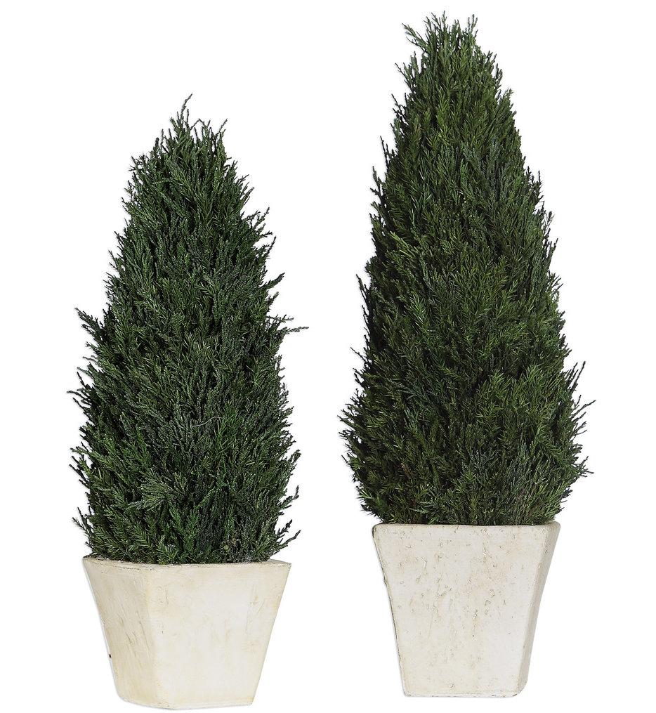 Cypress Cone Topiaries (Set of 2)